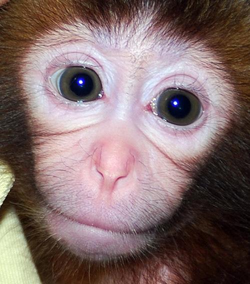 小猴子 小猴子图片 小猴子下山 高清图片