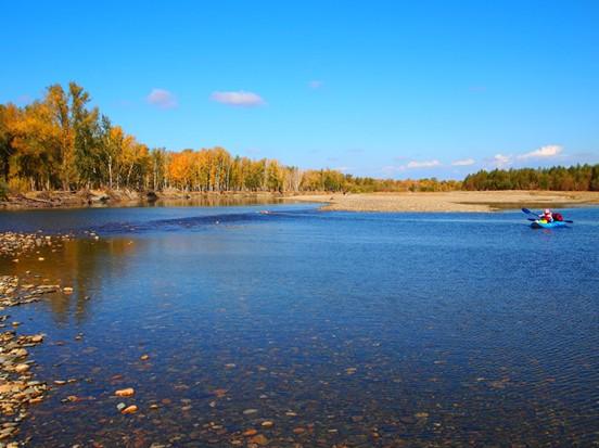 从码头下水之后,马上就汇入了额尔齐斯河。 两岸的山峦披上耀眼的五色华衣,金黄的微笑挂满山谷,聆听寂静的音阶,和着秋水的舒缓,旅程一程愉悦。河水带着从四面八方汇聚的激情,滚动着向西方流去。坐在船上,整个河面蓝天低云、宽阔空旷,让人心旷神怡,情绪激动。河谷水量充沛,动、植物品种繁多,是中国植物界里不可多得的天然的树种基因库。尤其是生长在岸边的欧洲黑杨、苦杨、银灰杨、银白杨,更是全国所独有的物种,放眼望去,或疏或密,或直或曲,一片就是一个品种,一片就是一个年代,像众兄弟、众姐妹一样聚集在一起,热闹而寂寞。