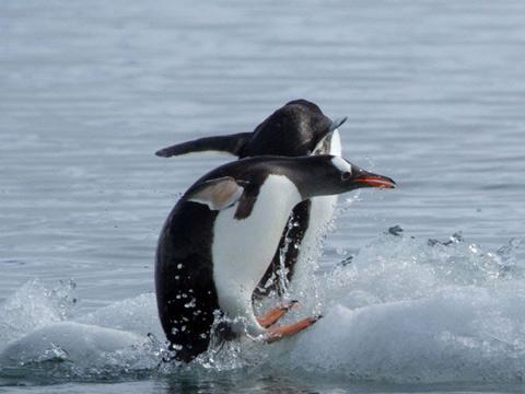 南极洲水温已上升到3-4℃