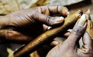 实拍古巴雪茄的制作过程