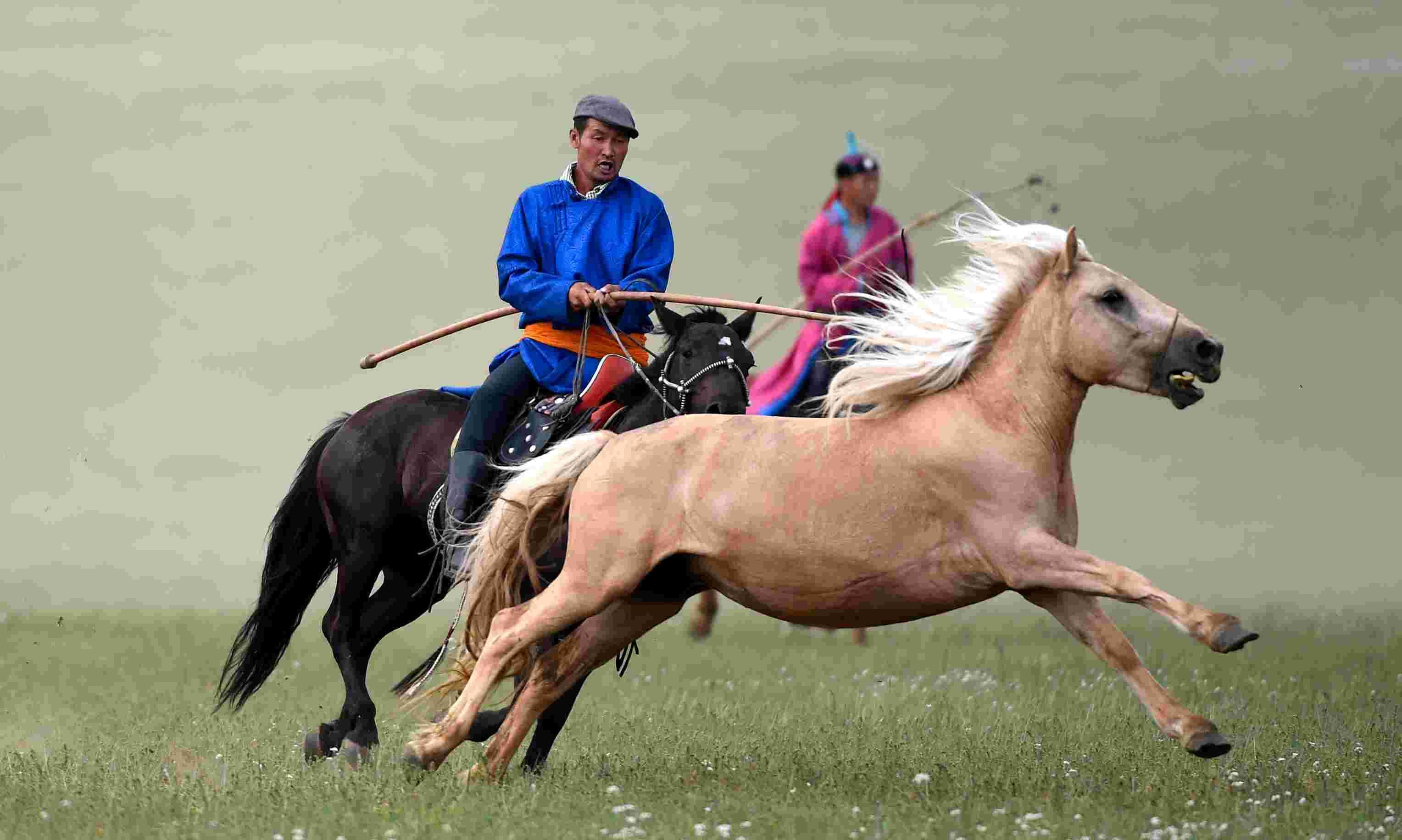 2015年7月19日   盛夏草原 激情套马   7月18日,一名蒙古族骑手在套马