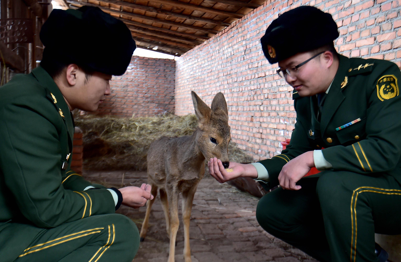 (锐视角)(1)内蒙古阿尔山:遏制乱捕滥杀野生动物的不