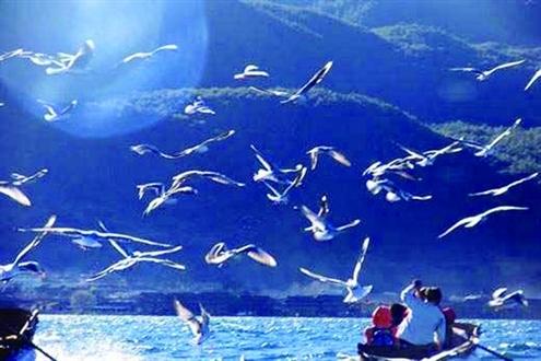 壁纸 海底 海底世界 海洋馆 水族馆 桌面 495_330